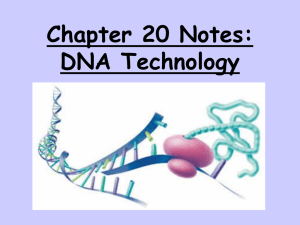 Chapter 20 Notes: DNA Technology