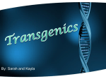Transgenics--Kayla and Sarah
