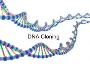 DNA Cloning - MrMsciences