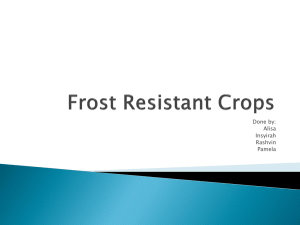 Frost Resistant Crops