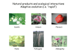 "Natural products and ecological interactions Adaptive evolution (i.e. ""rapid"") Scents Colours"