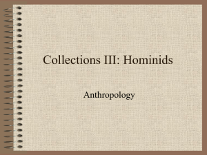 Collections III: Hominids - South Kingstown High School