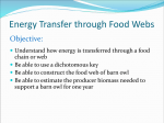 Energy Transfer through Food Webs
