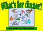pond water food web practice