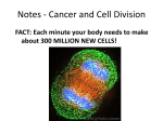 Notes - Cancer and Cell Division
