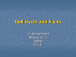 Cell Cycle and Facts