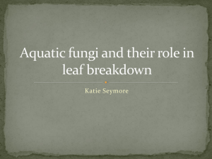 Aquatic Fungi & Leaf Breakdown