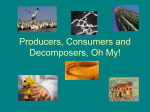 Producers, Consumers and Decomposers, Oh My!