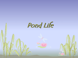 Pond Life - Eden Central School District / Home Page