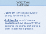 Energy Flow: Autotrophs
