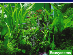 Ecosystems and nutrient cycles