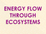 power point: energy flow through ecosystems
