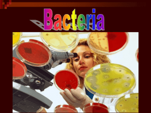 Microbes Bacteria