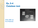 Ex. 5-4 Catalase test