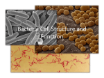 Bacteria Cell Structure and Function