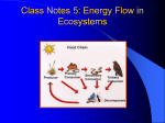 Class Notes 2: Energy Flow in Ecosystems
