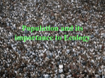 Population and it`s importance to Ecology