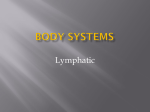 Body Systems Lymphatic