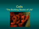 "Cells ""The Building Blocks of Life"""