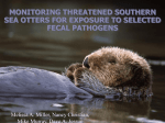 seaotterpathogentalk..