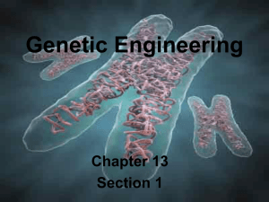Genetic Engineering - Lemon Bay High School