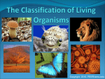 The Classification of Organisms
