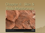 Chapter 5: Skin & Body Membranes