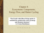 Environmental Problems, Their Causes, and the Issue of