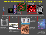 Molecular Machines (Jacobson) Group