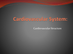 Cardiovascular System: - Hinsdale Township High School