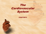 The Cardiovascular System CHAPTER 8