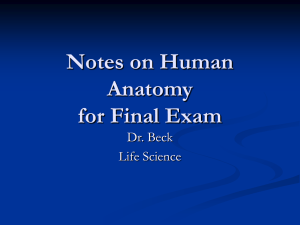 Notes on Human Anatomy for Final Exam