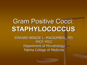 Gram Positive Cocci: STAPHYLOCOCCUS