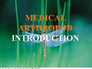 Medical arthropod