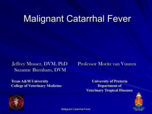Malignant Catarrhal Fever - College of Veterinary Medicine