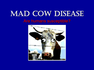 Mad Cow Disease - Faculty Website Listing