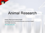 Animal Research - PEER