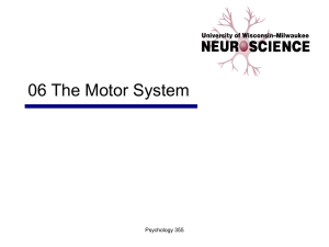 06 Motor Systems