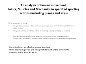 An analysis of human movement: Joints, Muscles and