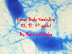 Human Body Vocabulary Ch. 12, 4th grade!
