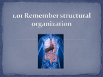 Structural Organization PPT