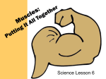 Muscles: Putting It All Together