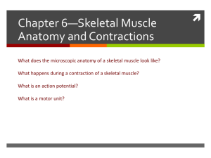 2 Skeletal muscle contractions - delano