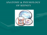 4.Anatomy & Physiology of Kidney - RIMS College