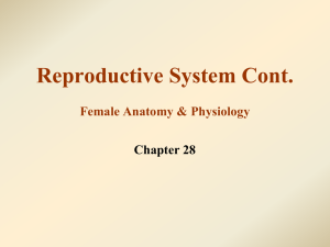 3. Female Reproductive System WEB