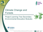 The PINEMAP/PLT Module - School of Forest Resources
