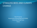 Stingless bees - IFES Symposium on Climate Change