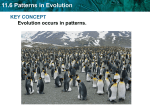 Patterns in Evolution, Adaptive Radiation ppt