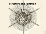 Structure and Function - Susquehanna University