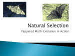 Peppered moth–Evolution in Action Natural selection